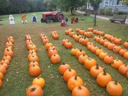 pumpkin lawn 2017