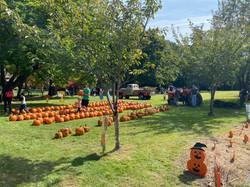 Pumpkin Sale 2021 Pumpkins Tractor Field 2