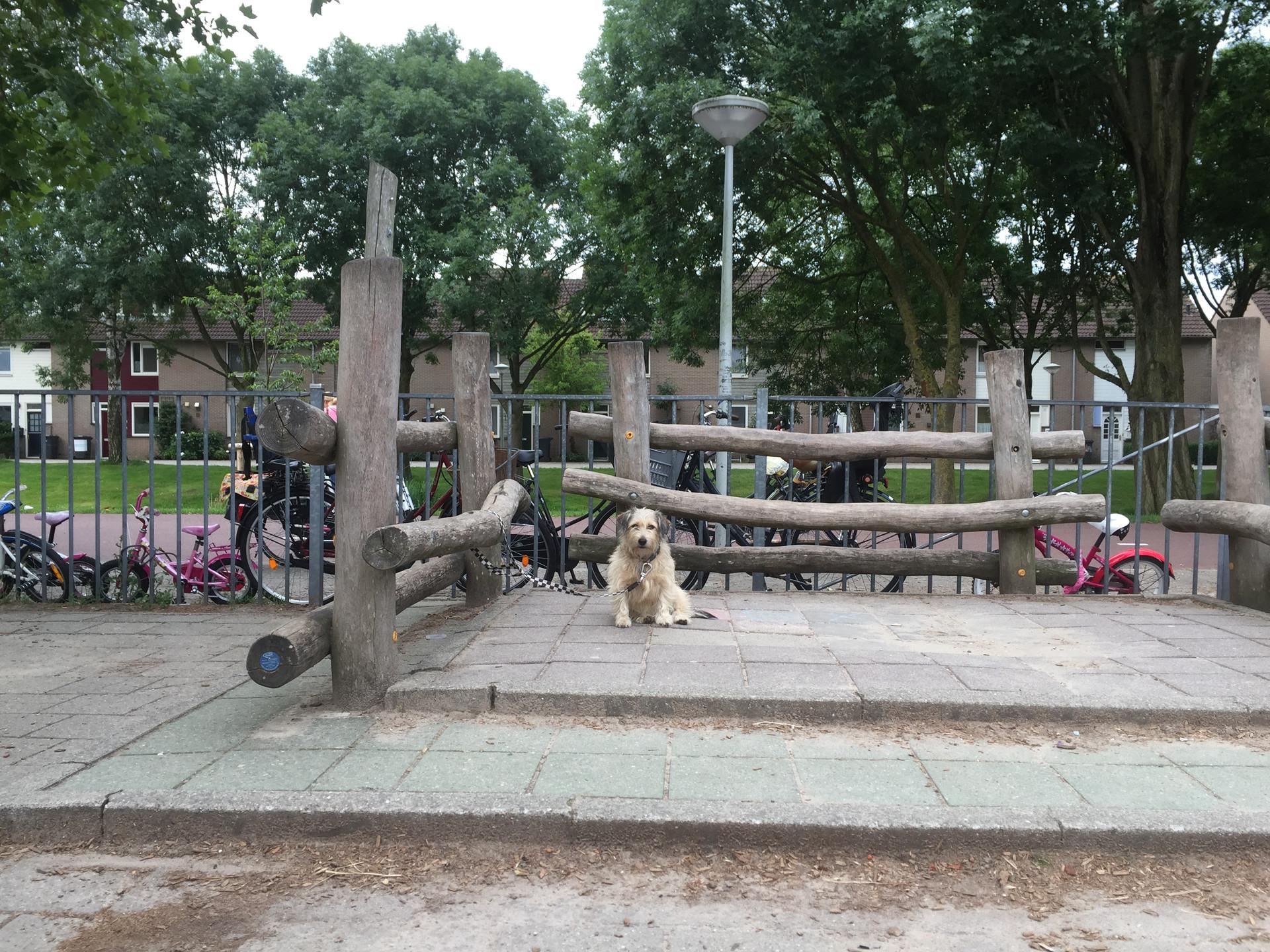 de eenzame hond