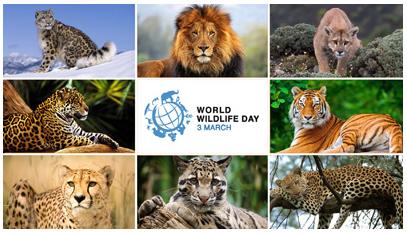 World Wild life Day 2018