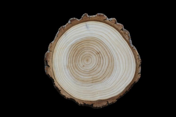 wood disk_edited.png