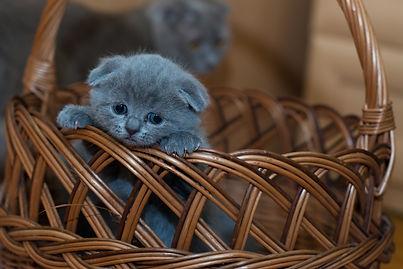 adorable-animal-basket-127027.jpg