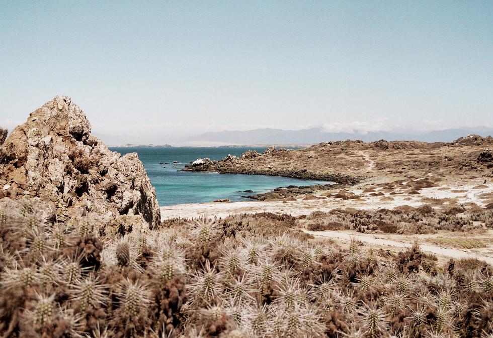 Punta de Choros, Chile 2016