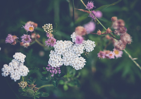 Fleur-sauvage-4.jpg