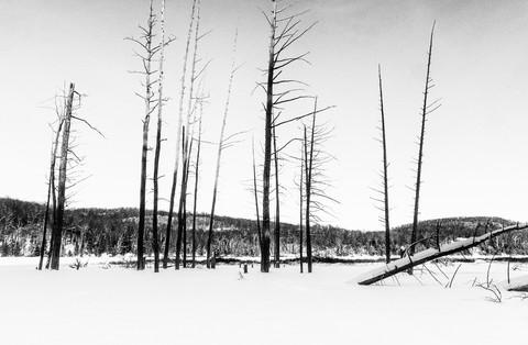 Paysage-hiver-foret_DSC9608.jpg