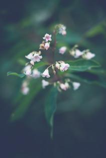Fleur-Sauvage-2.jpg