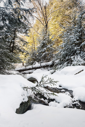Paysage-hiver-foret_DSC9574-Modifier.jpg