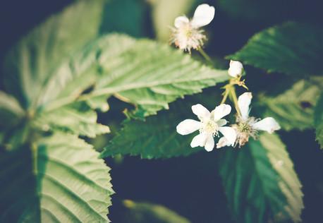 Fleur-sauvage-6.jpg