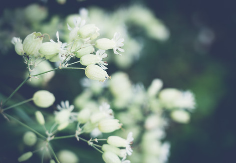 Fleur-sauvage-5.jpg