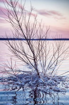 Branche-glace-DSC5420-.jpg
