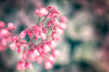 Fleur-rose-DSC5420-.jpg