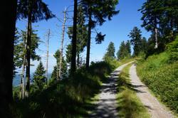 Typischer Panoramawanderweg