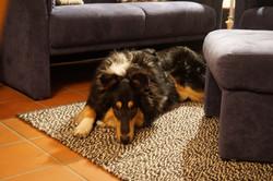 Ferienhaus für Urlaub mit Hund