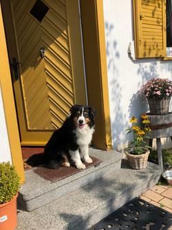 Hundefreundliches Ferienhaus