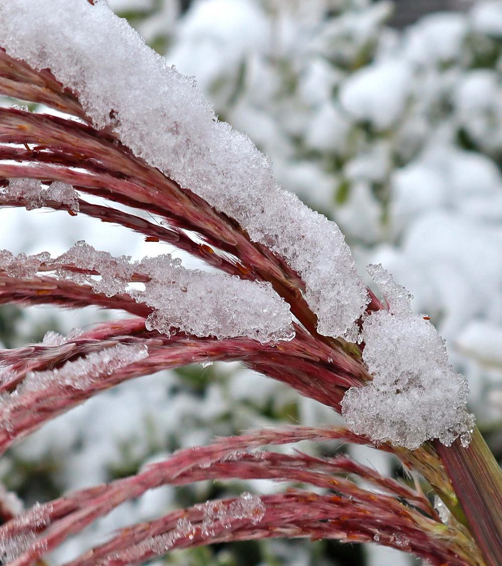 snow in oklahoma