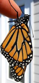 caterpillars3.jpg