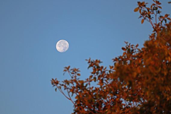 moonfallsmall.jpg