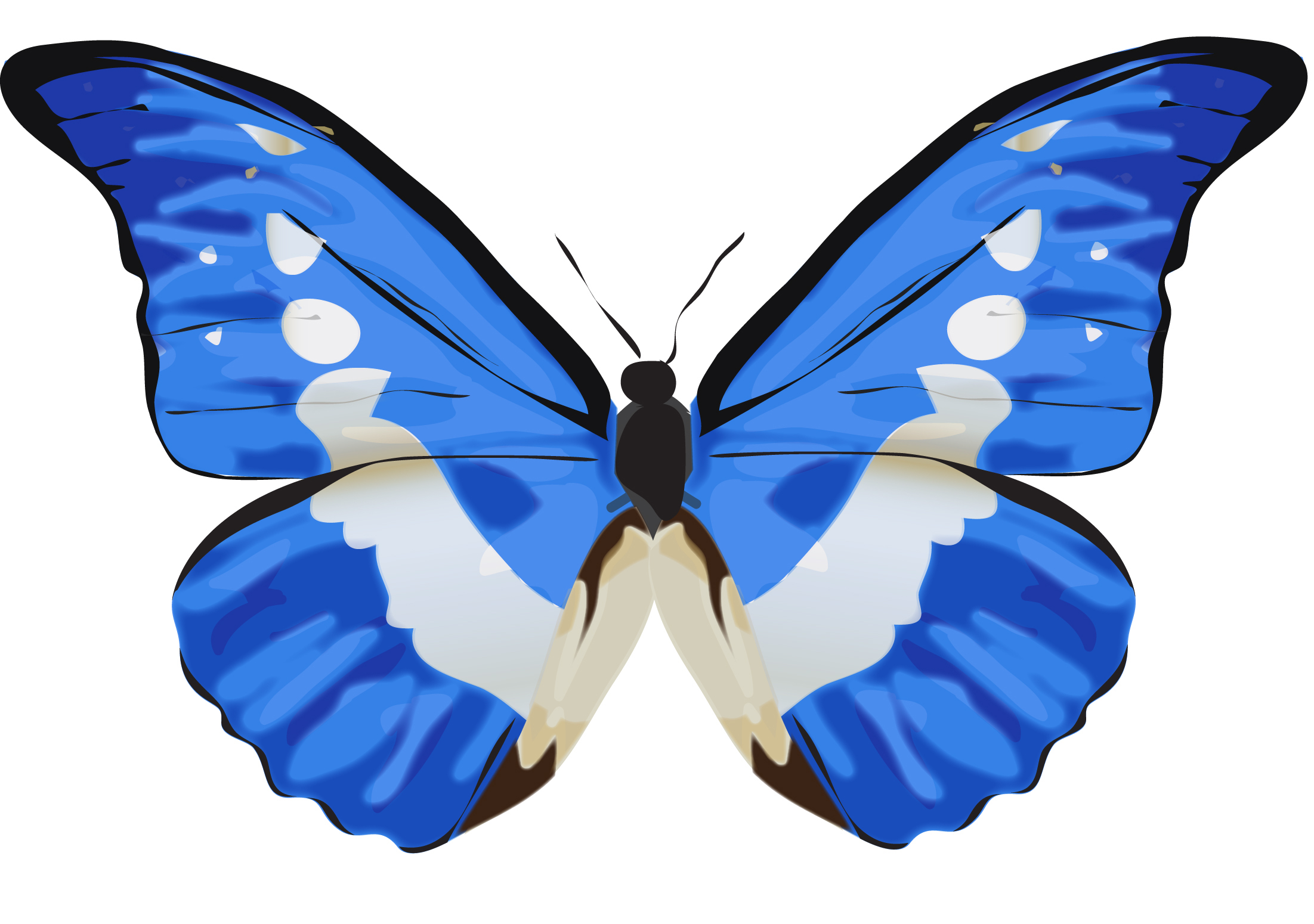 Butterfly Recreation copy