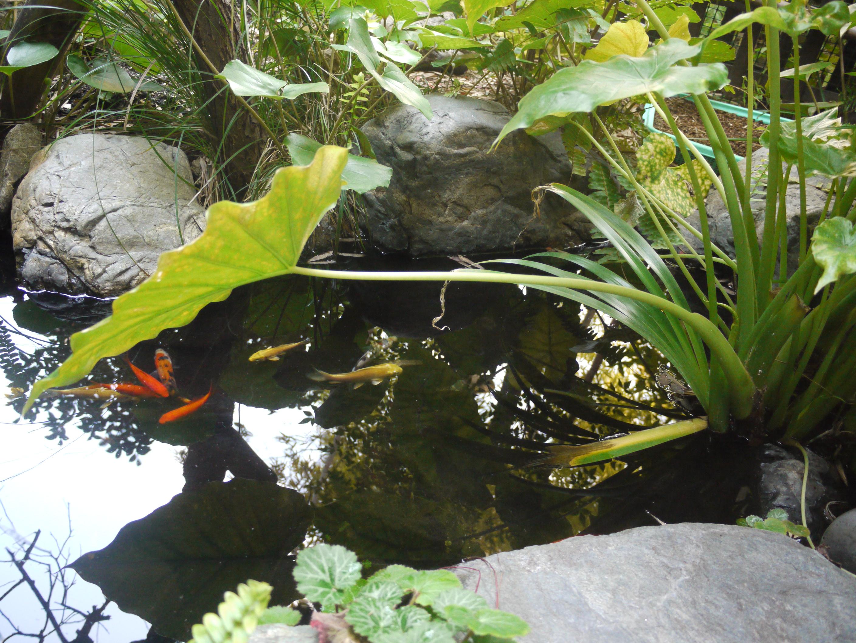 三代目手造りの池