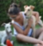 Adiestramiento perros bejar