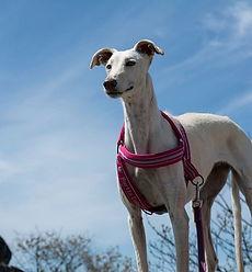 educacion canina bejar
