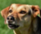 dog-3383872_1920.jpg