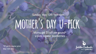 Mother's Day Blueberry U-Pick