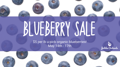 Blueberry Sale + New Hours!