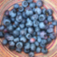 Blueberry U-Pick