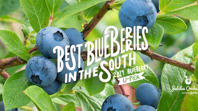 Jubilee Orchards 2019 U-Pick!