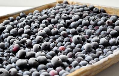 Storing Blueberries