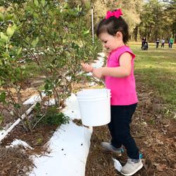 Jubilee Orchards u-pick 2017!