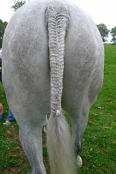 Custom Horse Hair Jewelry Designed from Your Horse Tail Hair!