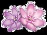 wb4w-sydney-logo_1_orig_edited.png