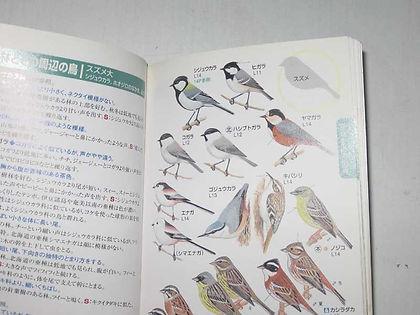 野鳥ガイドw (2).jpg