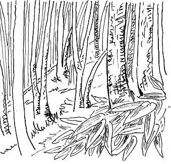 水彩画_20170703笹と樹林01.jpg