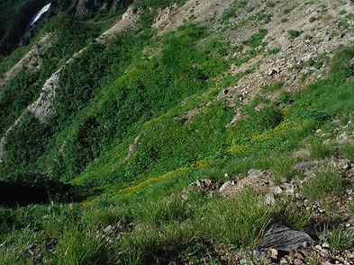 20150731_白山の花43.jpg