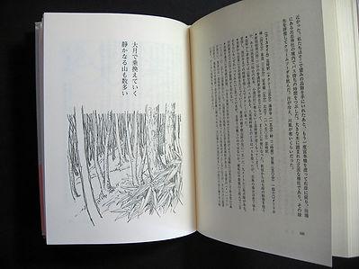 水彩画_20170703笹と樹林00.jpg