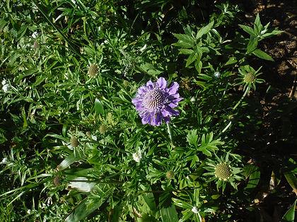 20150731_白山の花25.jpg