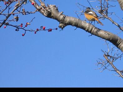 鳥のとまる枝.jpg