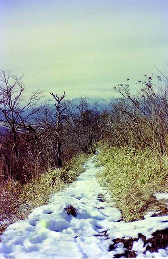 雪残る径.jpg