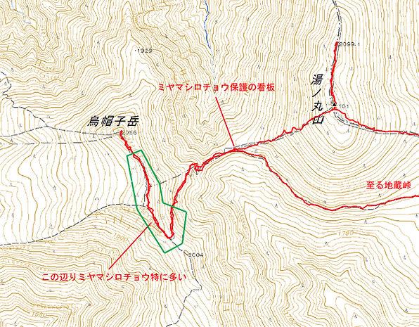 ミヤマシロチョウ3.JPG