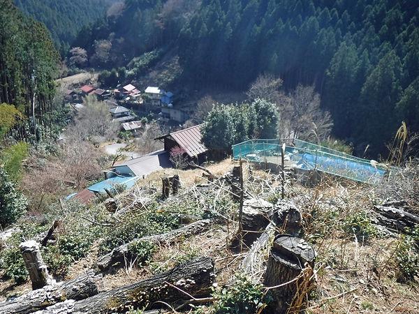 20210324_西吾野からブナ峠13.jpg