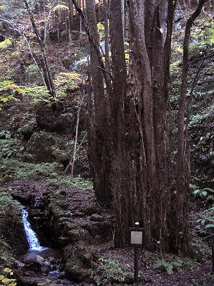 20131116石裂山04.jpg