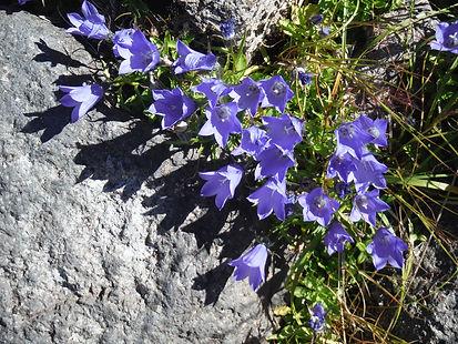 20150731_白山の花38.jpg