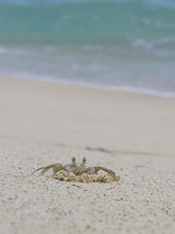 crab on beach, plastic pollution, nurdles