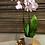 Thumbnail: Orchidee mit Topf