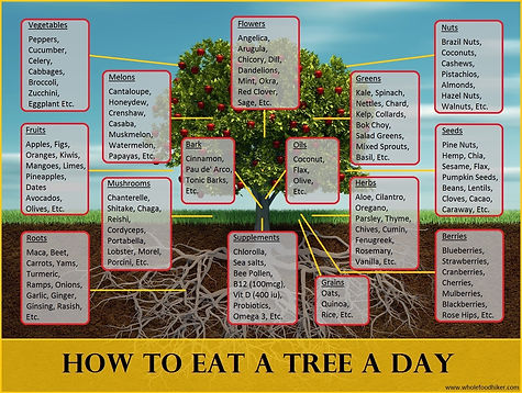 How To Eat A Tree A Day - by Aria Zoner.