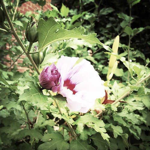 9. 38x38: Lying in the Shade: Kingston, NY