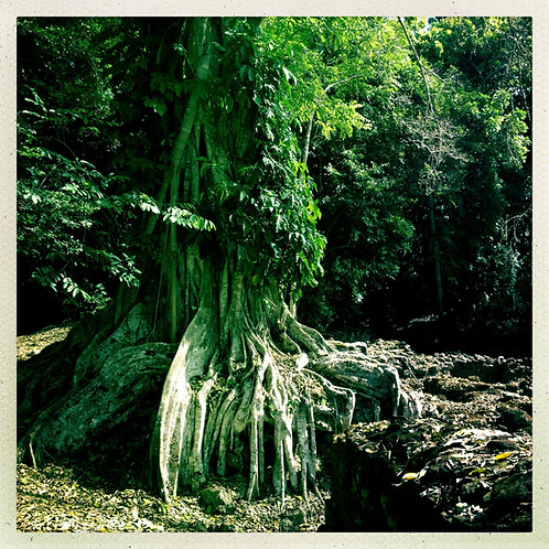 49. 38x38: Growin' Roots: Lamanai, Belize